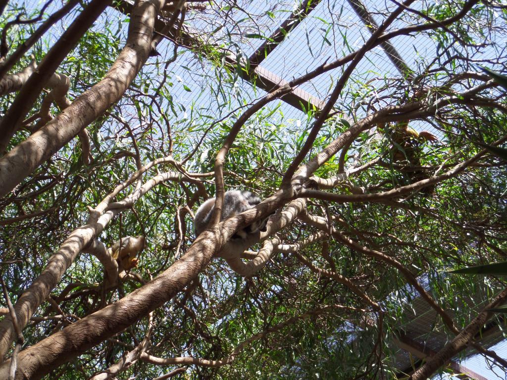 Tenerife, Monkey Park SAM_0763