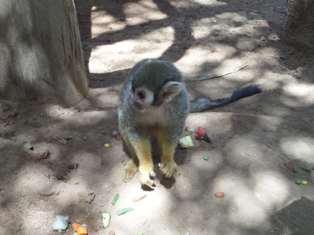 Tenerife, Monkey Park SAM_0764