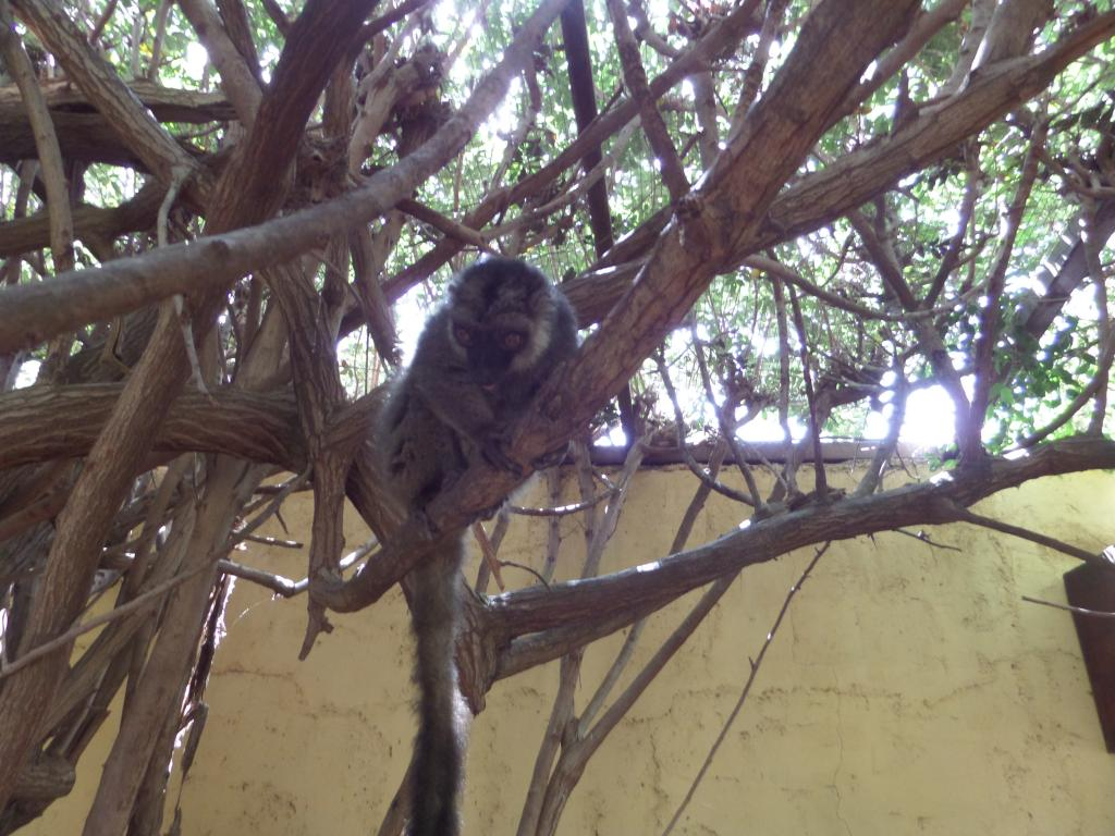Tenerife, Monkey Park SAM_0773