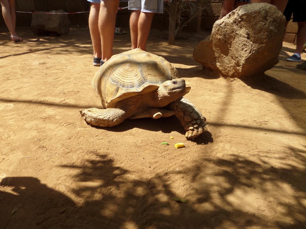 Tenerife, Monkey Park SAM_0781