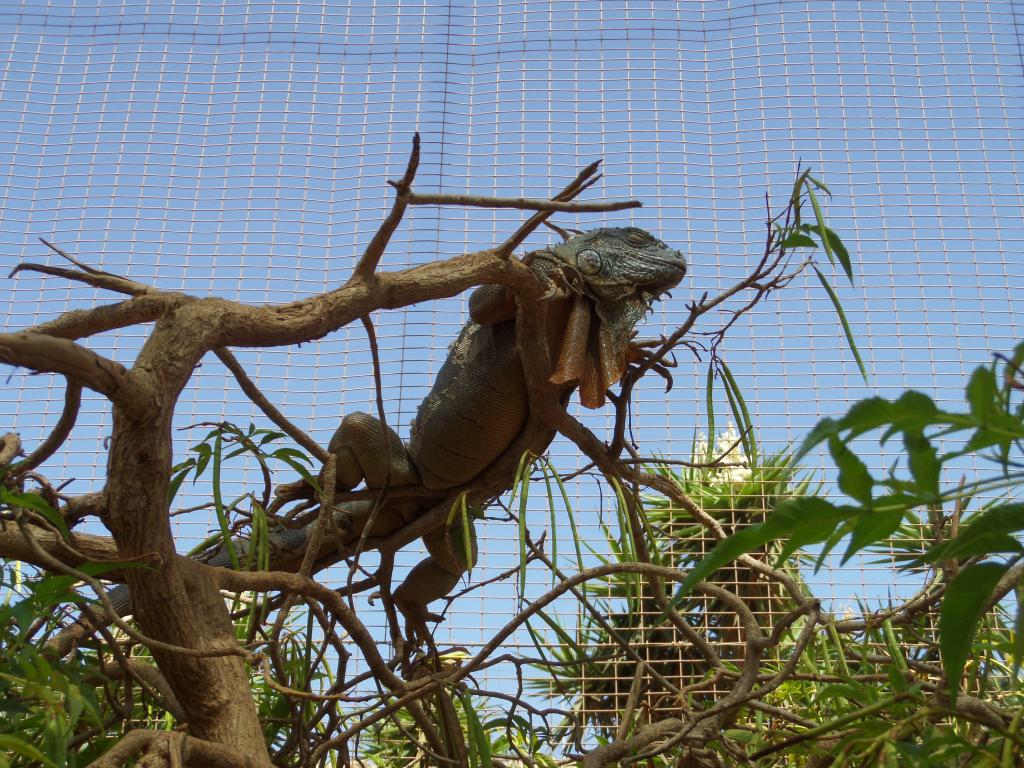 Tenerife, Monkey Park SAM_0782