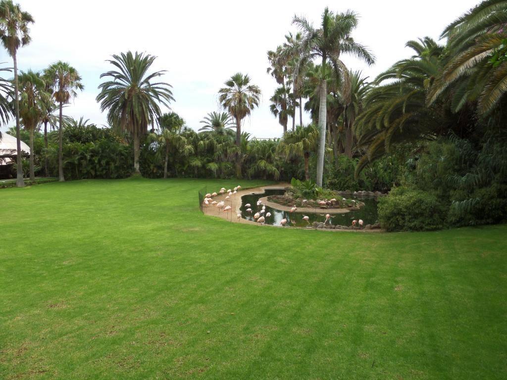 Tenerife, Loro Parque SAM_0821