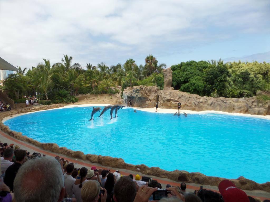 Tenerife, Loro Parque SAM_0827