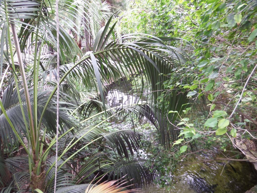 Tenerife, Loro Parque SAM_0864