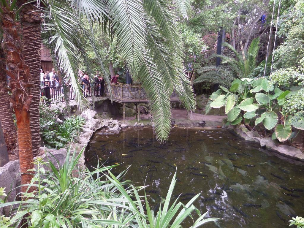 Tenerife, Loro Parque SAM_0865