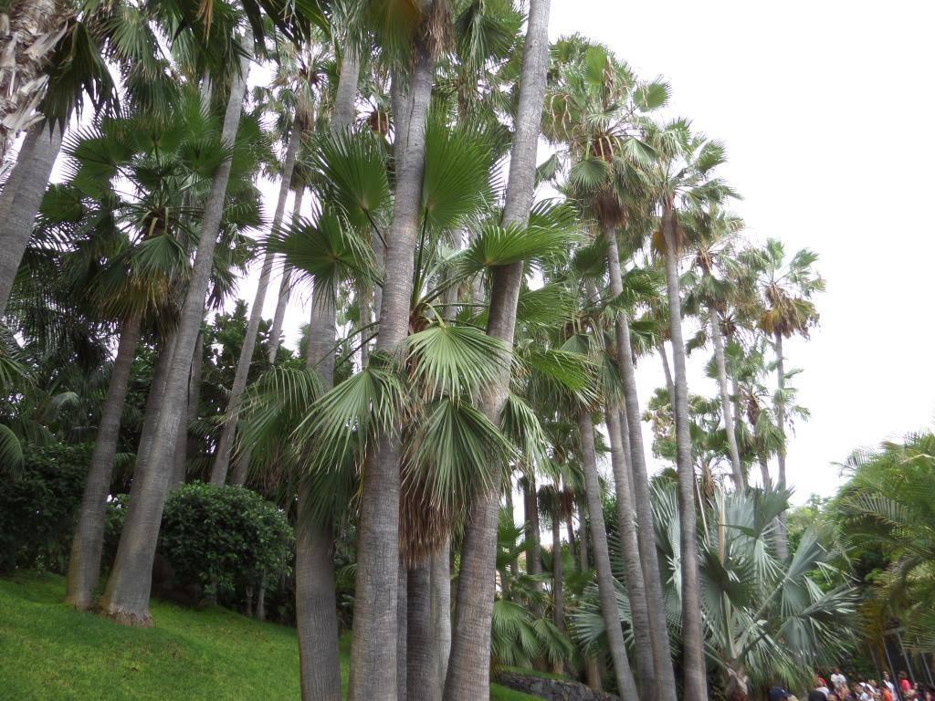 Tenerife, Loro Parque SAM_0866