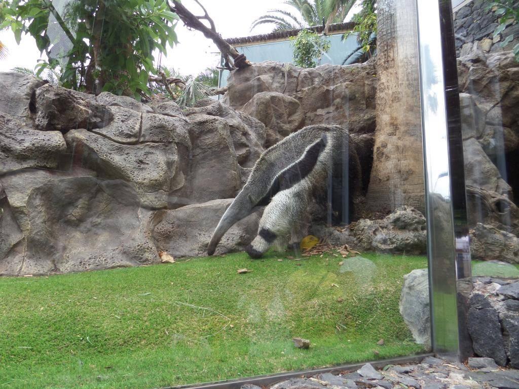 Tenerife, Loro Parque SAM_0873