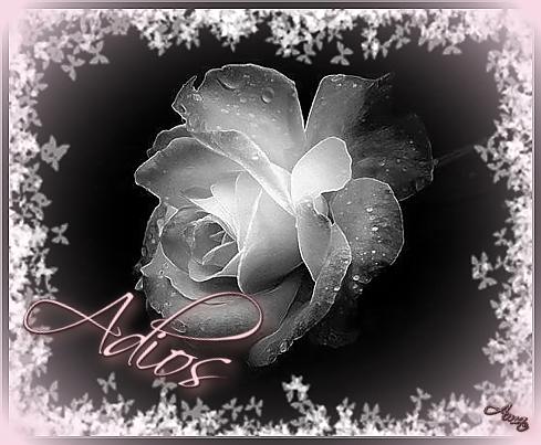 Rosa con Mascara Blanca y Sombra Rosada Adios_zpsgrhtby5s
