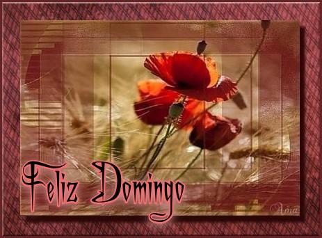Amapola Lindisima Amapola no seas tan Ingrata y Quiereme  Domingo%202_zpsgyho62s2