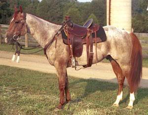 My horses :] Redroanqhstallion