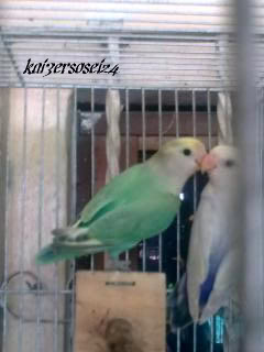 Post your favorite birds - Page 5 Image0041
