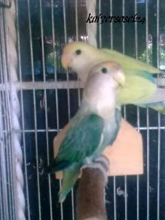 Post your favorite birds - Page 5 Image0054