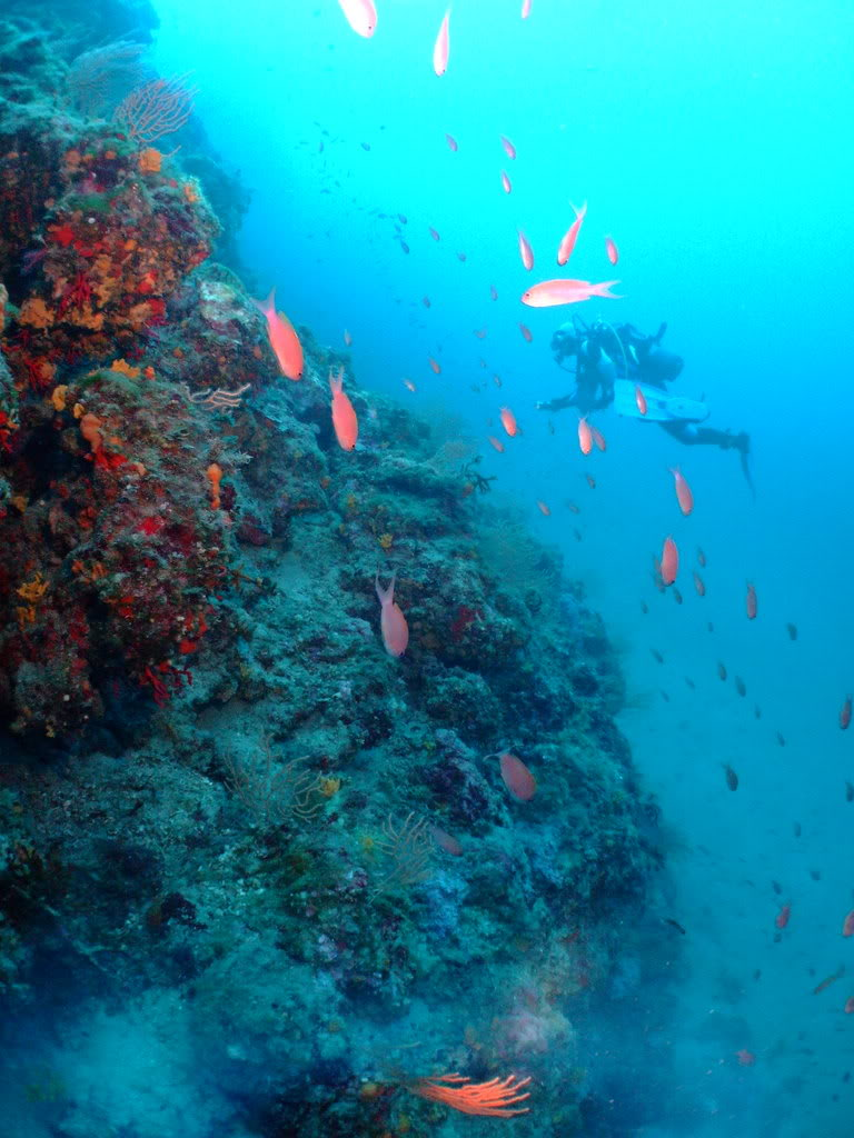 mission Test : JLC Master Compressor Diving Chrono en plongee profonde (part 2) DSCF3897