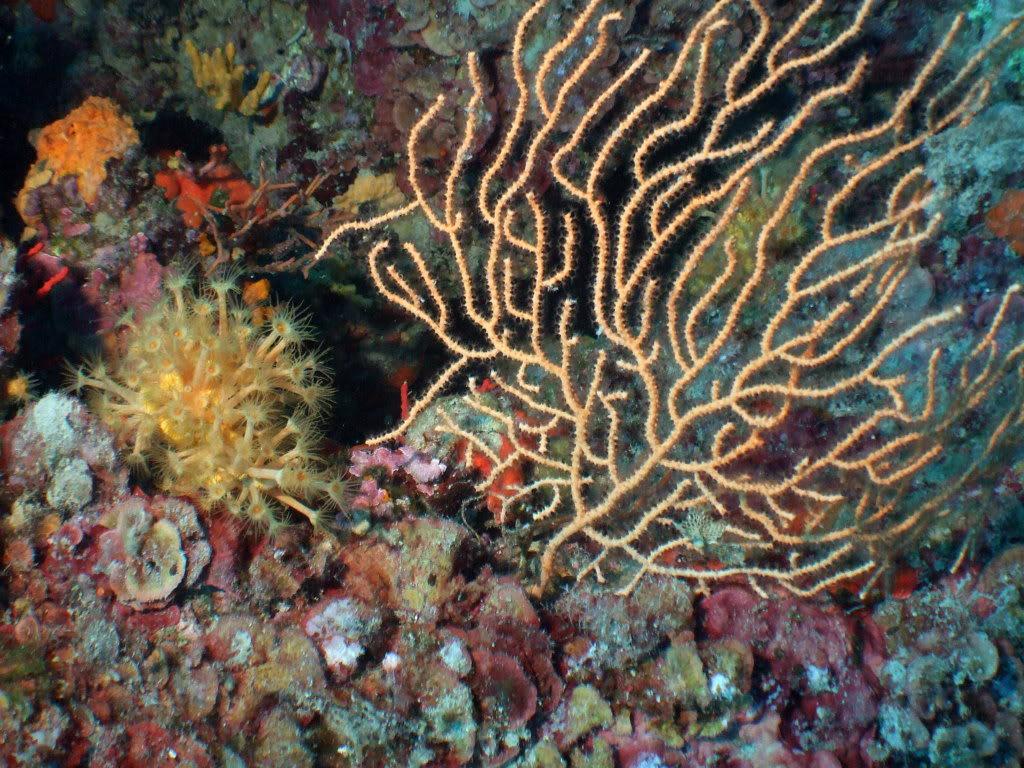 mission Test : JLC Master Compressor Diving Chrono en plongee profonde (part 2) DSCF3901