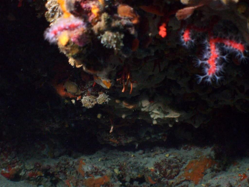 mission Test : JLC Master Compressor Diving Chrono en plongee profonde (part 2) DSCF3903