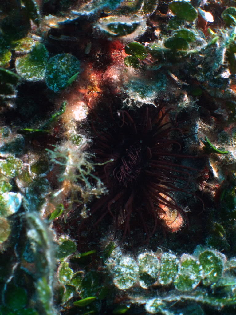 mission Test : JLC Master Compressor Diving Chrono en plongee profonde (part 2) DSCF3915