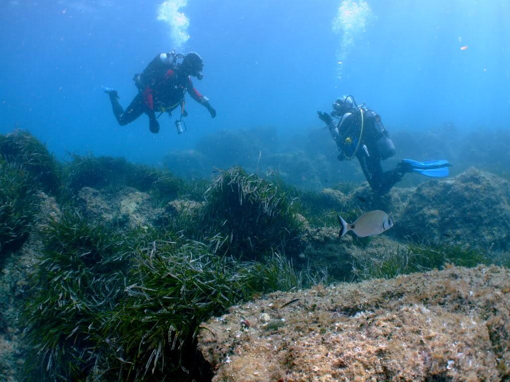 mission Test : JLC Master Compressor Diving Chrono en plongee profonde (part 2) DSCF3936