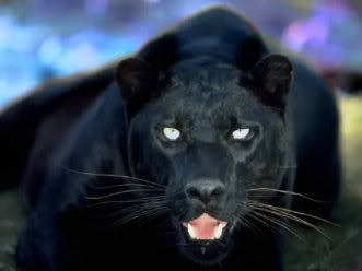 ablackpanther