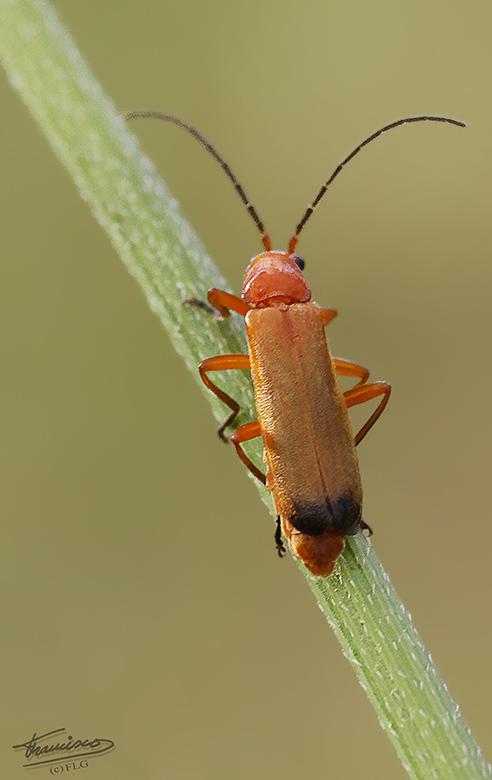 Mini Escarabajo DELTALLOBREGAT_004reduc_zps7475f3fb