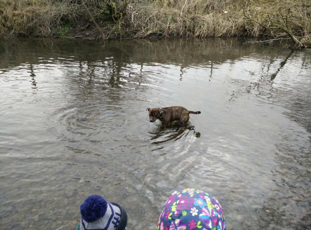 Playing in the river today. IMG_20150204_141645_zpsip2aoyd0