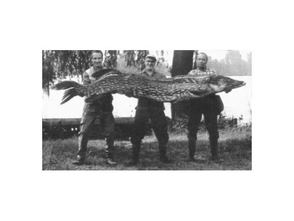 Alleged 60lb pike Sanstitre1