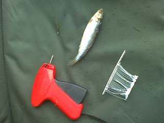 Tagging Method bait attachment Image0077