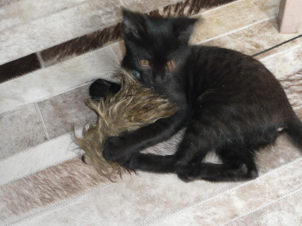 Loupiot, mâle type européen noir né 15/02/2015 - Page 2 P1020018_zpsotk841d4