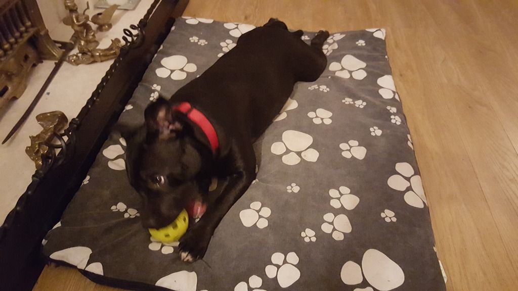 I Like my ball I found in the park- just too tired to play with it!! 20151108_203237_zpsr7qvuwjf