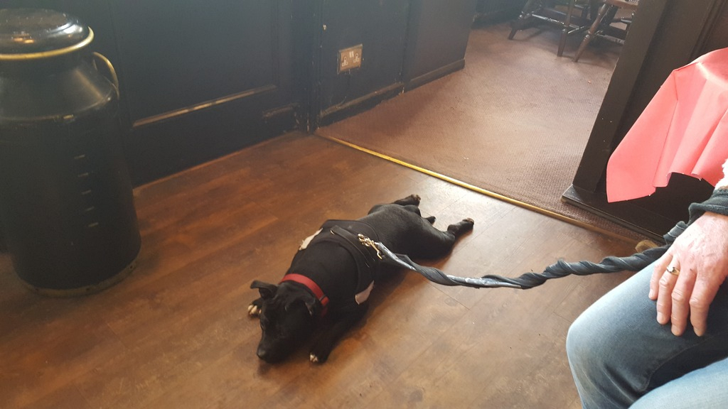 I will lay where I want evenin the pub !! 20160225_162000_zpsaa2gbqea
