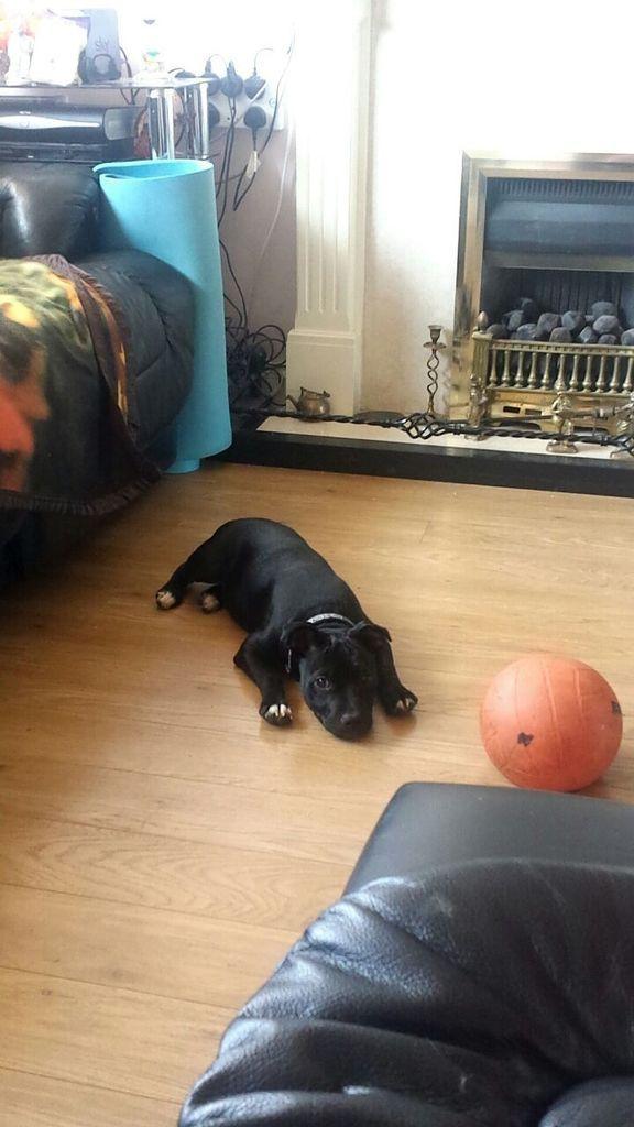 Please play ball.. I will be good !  IMG-20150701-WA0001_zpsqdabcocf