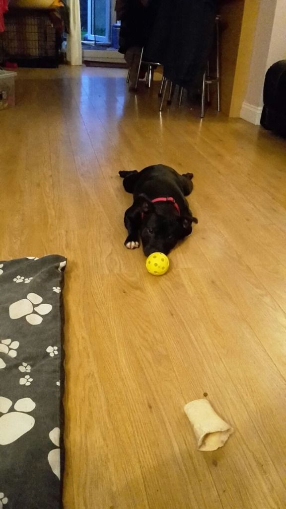 I Like my ball I found in the park- just too tired to play with it!! IMG-20151108-WA0000_zpsyjujds1k