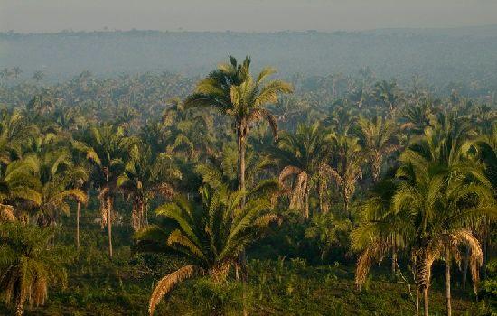 Ilha Oeste - Cocais Cocais