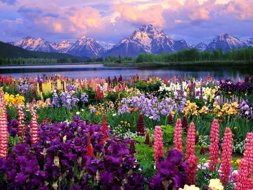 Slike  Planine,prirode,naseg kraja Colorful_by_ZEROsilencer