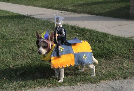 Funny/Cute Animal Pics - Page 2 Dogcostume