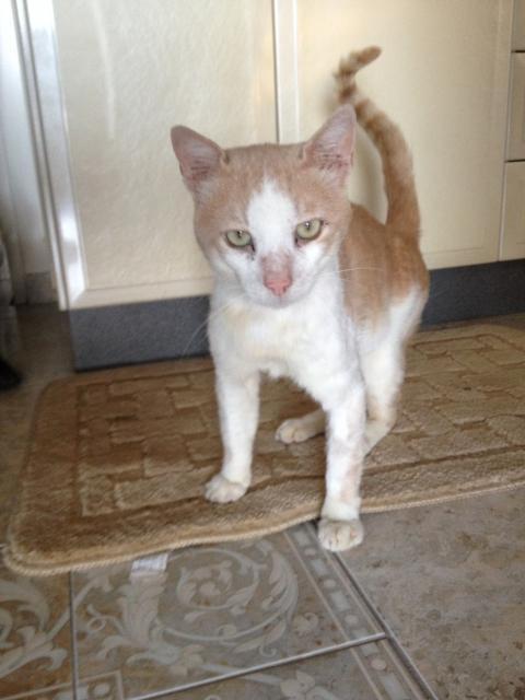 Η ιστορία του Μήτσου: Από τίγρης έγινε χαδιάρικο γατάκι IMG_1551_zpse6dbf687