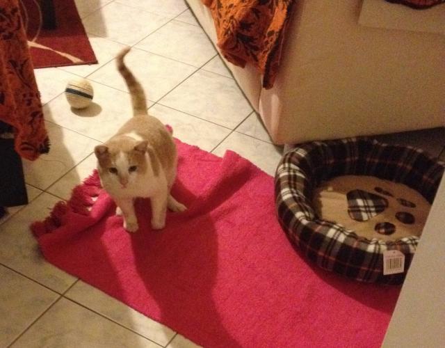 Η ιστορία του Μήτσου: Από τίγρης έγινε χαδιάρικο γατάκι IMG_1747_zps02355655