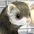 [Registro] Mascotas - Página 3 Soraru