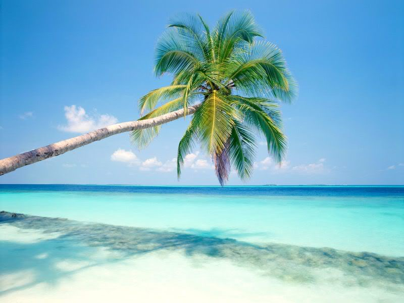 I have some ideas for backgrounds! :D Tropical_Island_Maldives