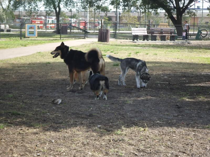 Doggie Park Video DSCF1869
