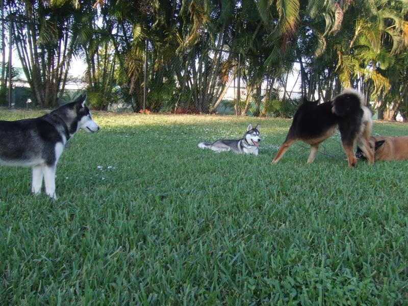 Doggie Park Video DSCF3463