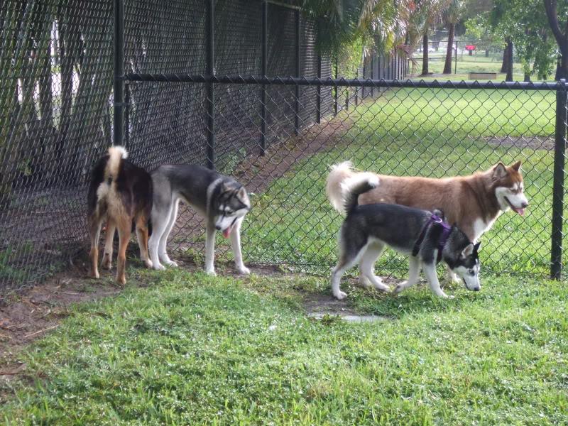 Doggie Park Video DSCF3529