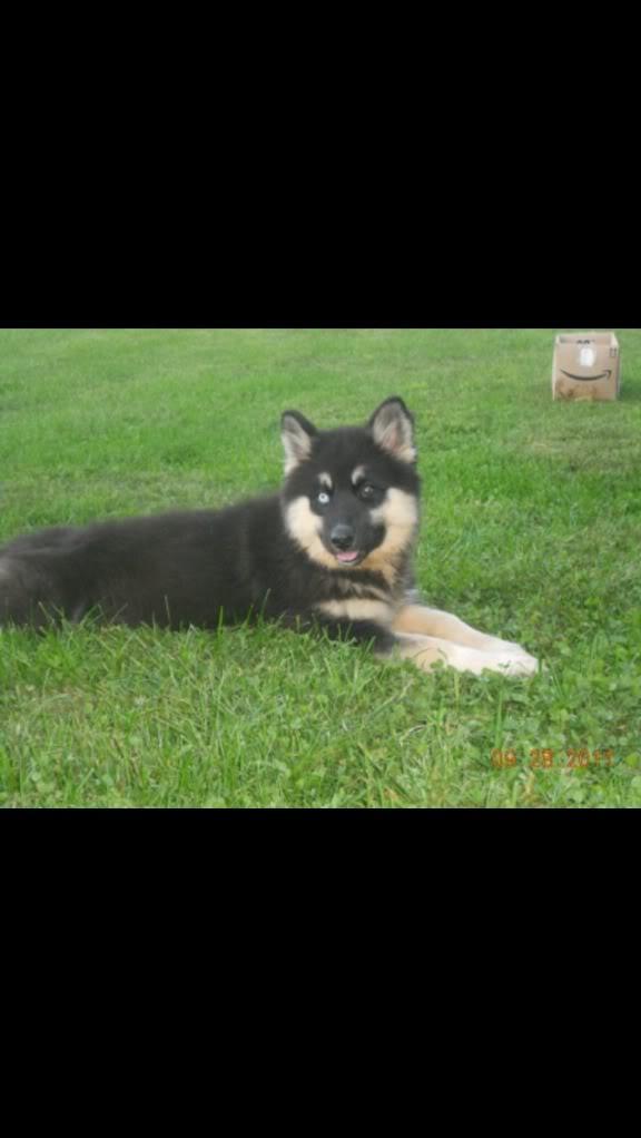 Unique Beautiful Dogs, Very Old Line 489797AB-9CC3-4B26-9B80-59D204FDB5A3-11547-00000A1D11D19F25_zps20d2e00f