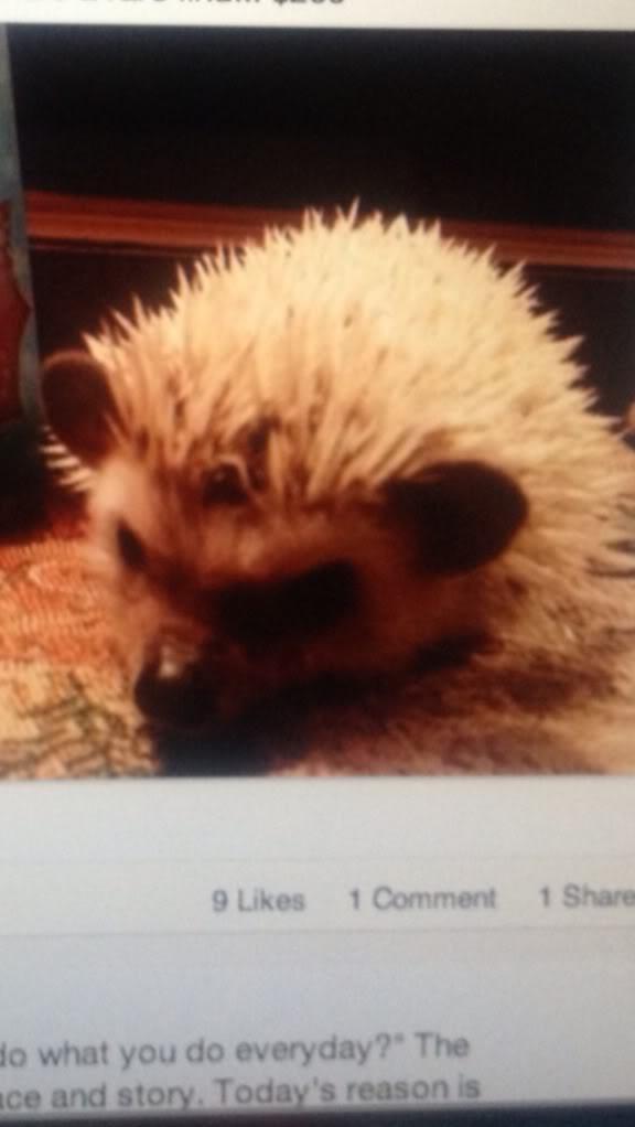 Anyone own a pet hedgehog?   (Pic included!) A80837EF-E258-47C4-94DC-2E4132A7113A-1630-0000017CF15367BB_zpse027bdca