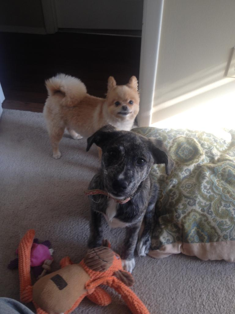 Koda and Nyx! Scrapbook! Updated 9/18/14 - Page 4 B46163A3-203D-4927-A7FB-CDF60D940337_zpsm5necqwp