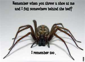 I remember  Spider