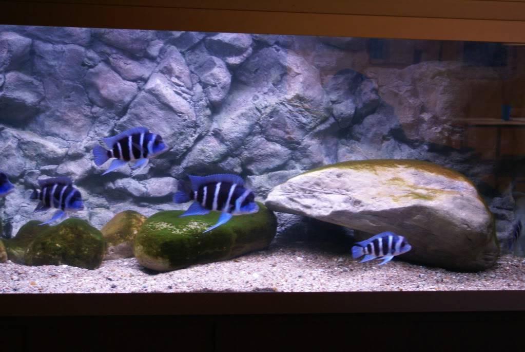 Ja så er det nye akvarie snart klar!!! DSC00689