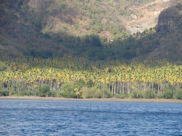Croisière aux Grenadines Edition 2008 !!! DSC00903