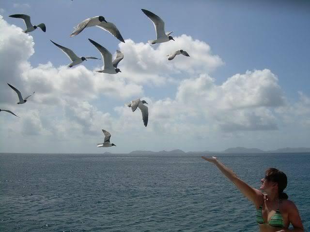 Croisière aux Grenadines Edition 2008 !!! DSCN3227