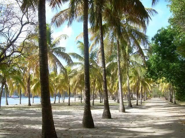 Croisière aux Grenadines Edition 2008 !!! DSCN3250-1
