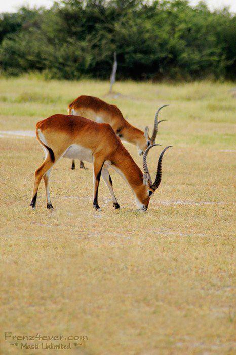 Amazing African Wildlife - Page 2 AW12_zps45c652da